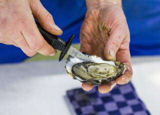 Shucking Dutch oysters